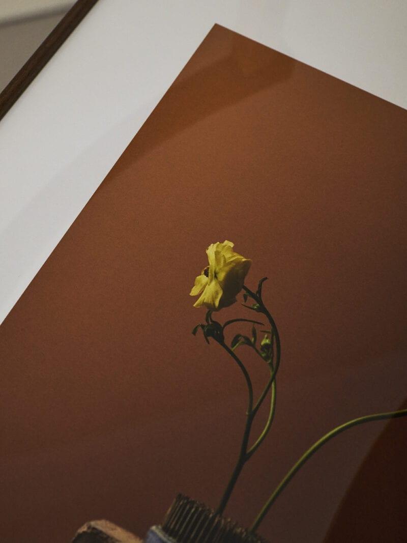 Kinfolk x Alium, Staffan Sundström - Spring Flowers